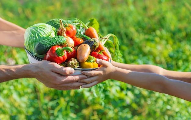 手に野菜を持って庭で子供と父親。セレクティブフォーカス。