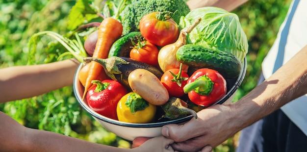 手と野菜を庭で子供と父親