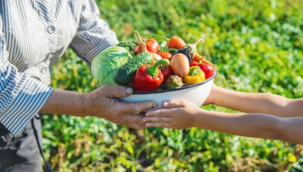 子供と祖母が庭で手に野菜を。セレクティブフォーカス。