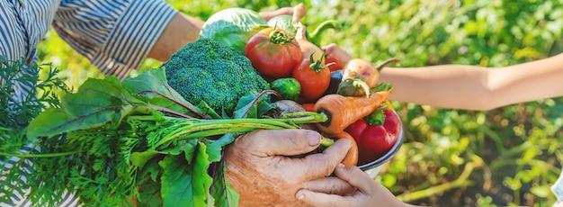 子供と彼らの手で野菜を庭で祖母
