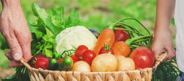 子供と農場の野菜。セレクティブフォーカス