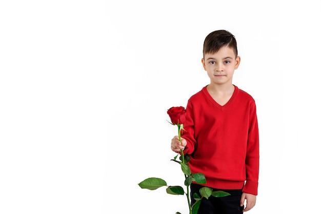 Мальчик ребенка в красном свитере держа цветок красной розы изолированный на белой предпосылке. день святого валентина. копировать пространство