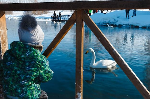 子供の男の子は湖の上に立って白い白鳥を見ています