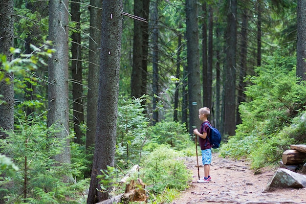 Child boy with hiker backpack and stick standing alone on path in pine forest