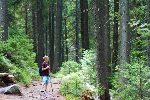 Child boy with hiker backpack and stick standing alone in pine forest.