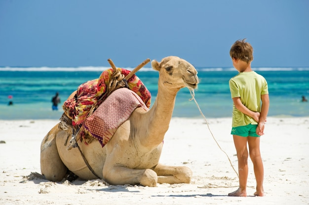 Child and camel the beach