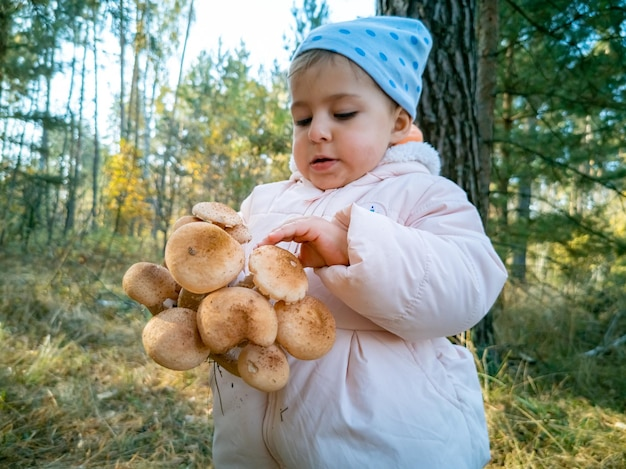 Ребенок собирает опята в осеннем лесу, крупным планом, малыш держит красивые съедобные