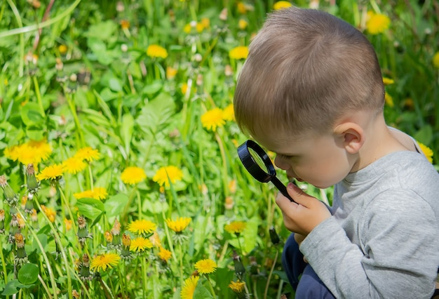 The child examines the flower in a magnifying glass. nature. selective focus