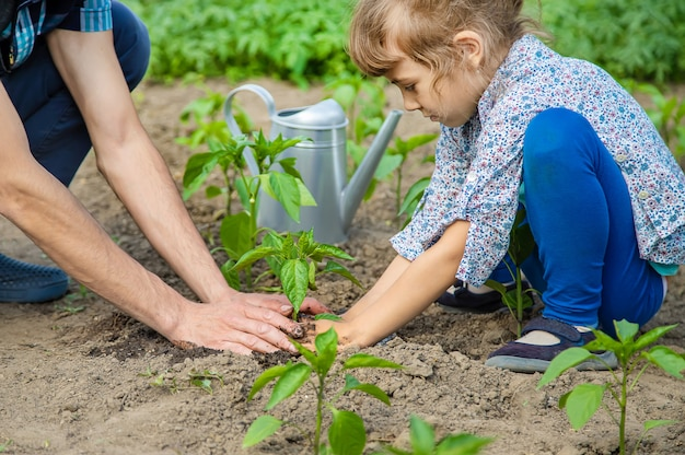 Child and father plants in the garden.
