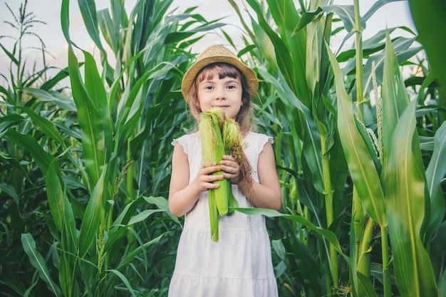 Child in the field of corn. a small farmer. selective focus.
