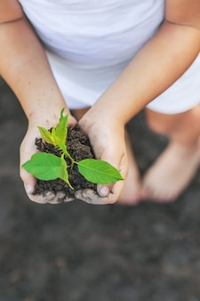 A child in the garden plants a plant.