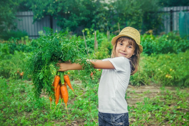 A child in the garden with carrots.