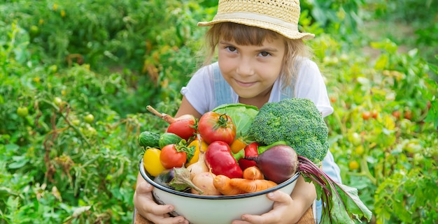Child in the garden with vegetables in his hands. selective focus.