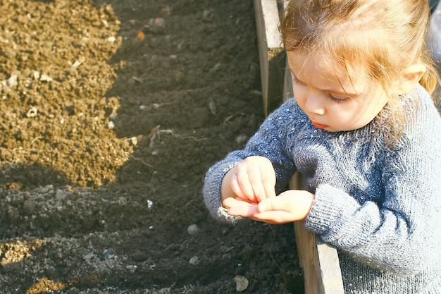 봄 햇살에 씨앗을 심는 아이 소녀. 원예, 개념 꽃 씨앗을 높은 침대에 심습니다.
