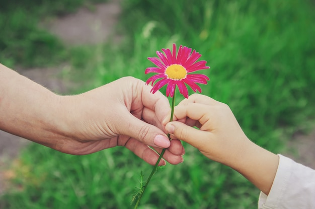 The child gives the flower to his mother. selective focus.