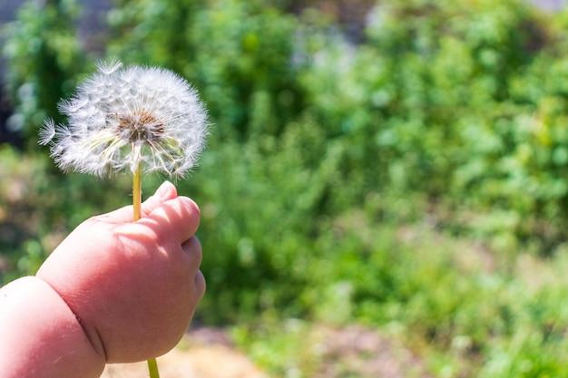 꽃을 주는 아이 손
