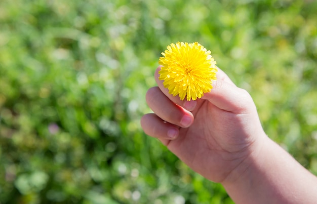 Child hand holding a daisy detail on a sunny grass background Premium Photo