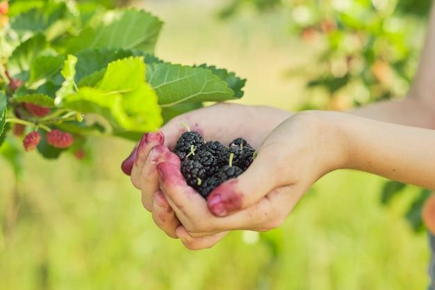 熟したベリー桑を持っている子の手、桑の木のある庭