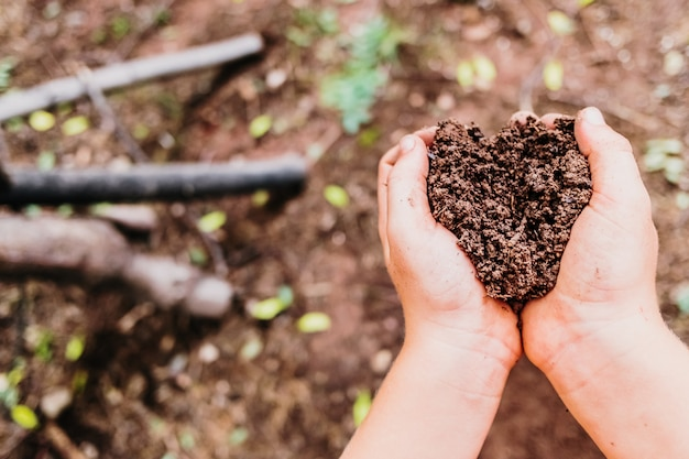 Child hands collect fertile soil