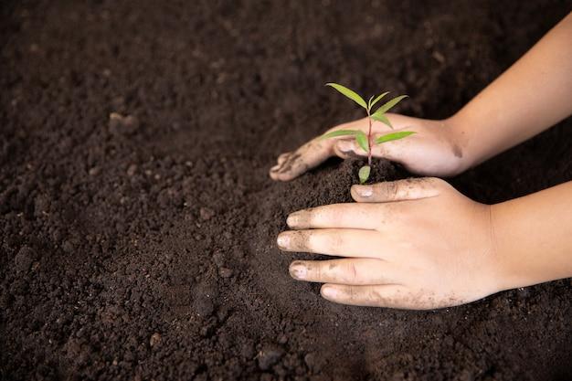 아이 손을 잡고 젊은 녹색 식물을 돌보는