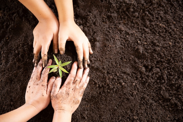 Child hands holding and caring a young green plant