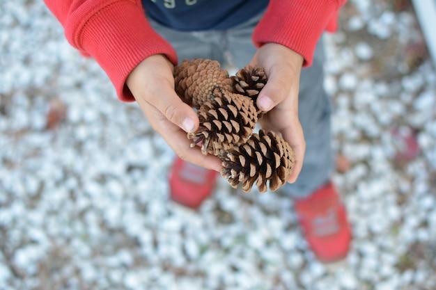 Child hands holding pine tree defocused background