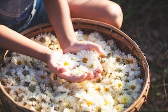 Child holding beautiful flowers in the basket of flower