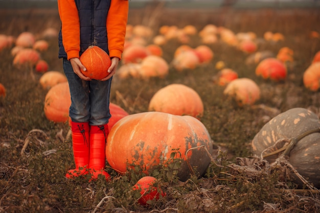 Child holding orange pumpkin on pumpkin field at fall.