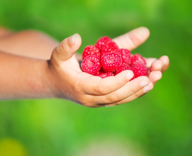 Child holding tasty raspberry