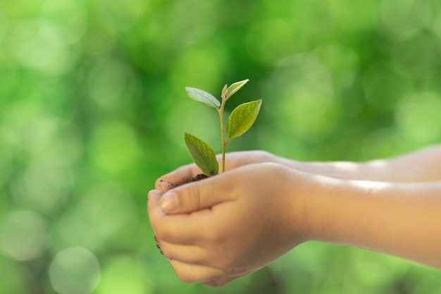 手に若い緑の植物を持っている子供