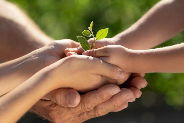 手に若い緑の植物を保持している子。