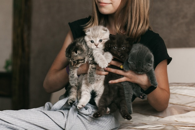 The child holds beautiful british kittens of different colors in the hands of a girl