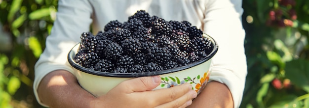 The child holds blackberries in the hands. selective focus.