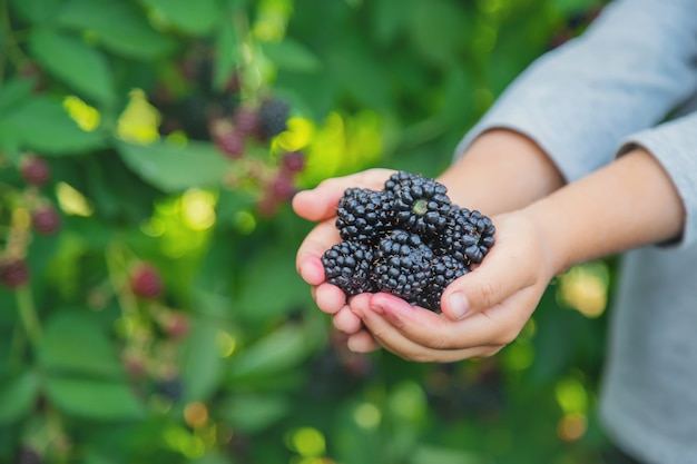 The child holds blackberries in the hands