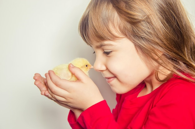 The child holds a chicken in his hands. selective focus.