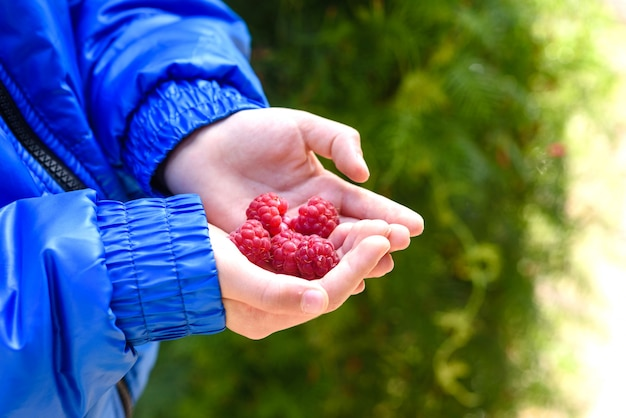A child holds a large raspberries in his palm