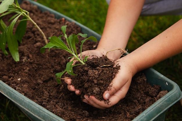 Ребенок держит землю, почву с зеленым растением в руке
