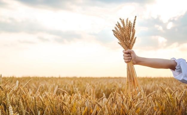 Ребенок в пшеничном поле. в вышиванке концепция дня независимости украины. выборочный фокус. дитя.