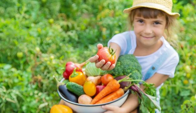 彼の手で野菜を庭で子供。セレクティブフォーカス。