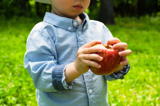 Child is holding an apple in a green grass at sunny day