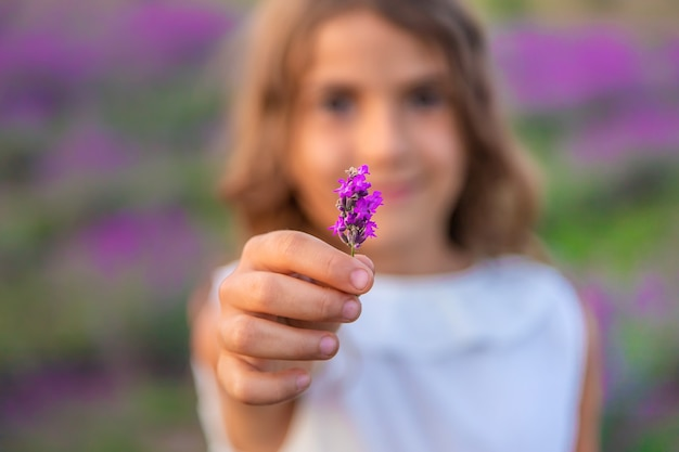 A child in a lavender field. selective focus.