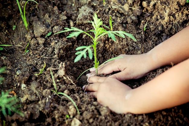 세계 개념을 저장으로 검은 토양에 어린 나무 심기 아이 작은 소녀 손