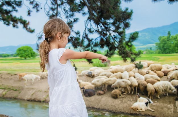A child looks at a flock of sheep. travel in georgia.