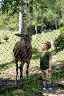 動物園で野生の鹿の近くの子。公園で小さな鹿を探している少年