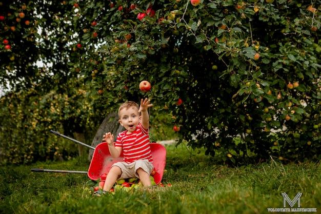 Ребенок собирать яблоки на ферме, играя в саду деревьев
