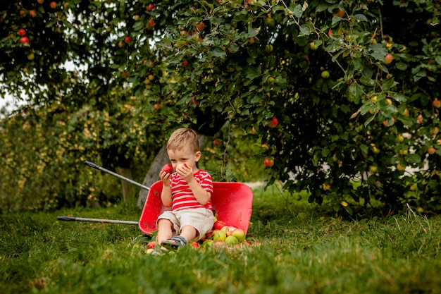農場でリンゴを摘む子供