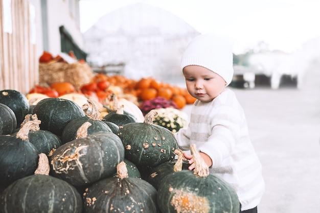 Child picking pumpkins at pumpkin patch little toddler girl playing among squash at farm market