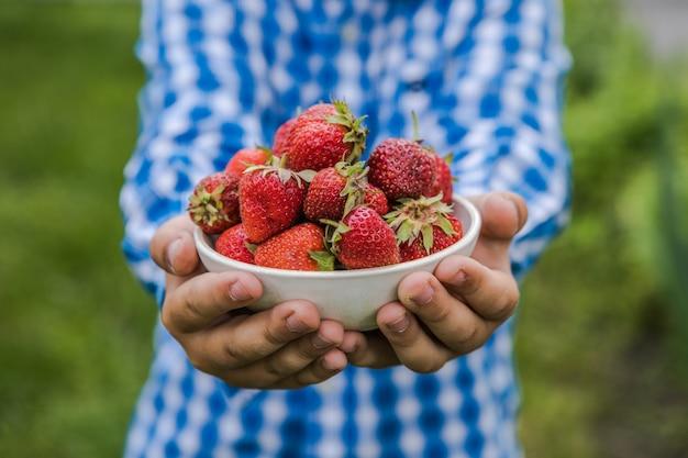 화창한 여름날 과일 농장에서 딸기를 따는 아이. 아이들은 신선한 익은 유기농 딸기를 손에 들고 있습니다.