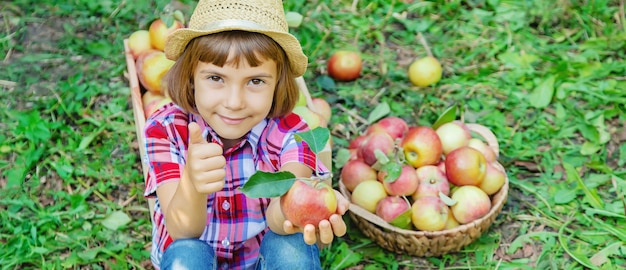 子供は庭の庭でリンゴを拾います。セレクティブフォーカス。