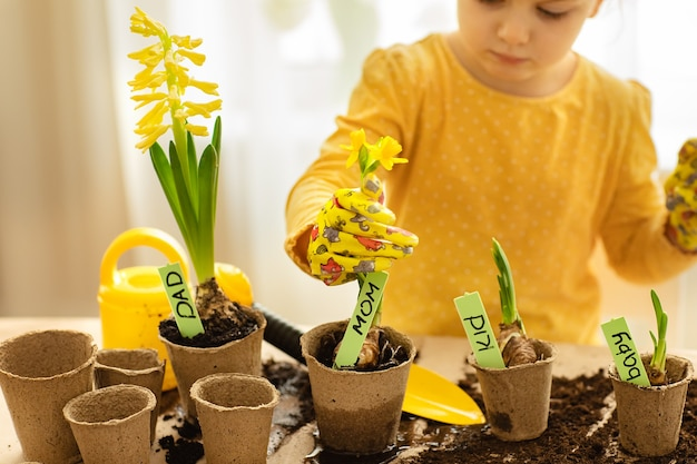 Child planted indoor flower bulbs seeds at home